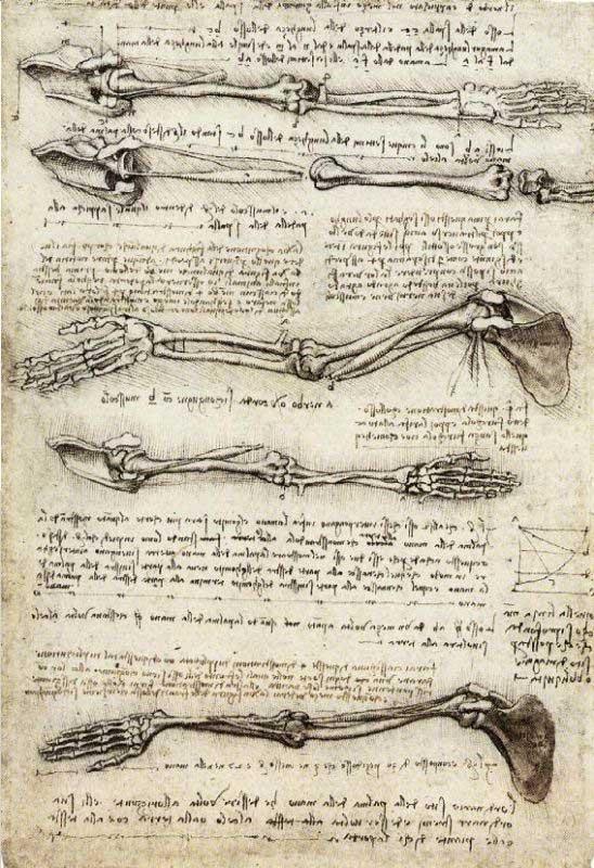 یک سری طراحی استخوانهای دست و بازو از داوینچی