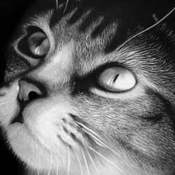 طراحی از گربه