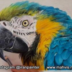 مداد رنگی از پرنده