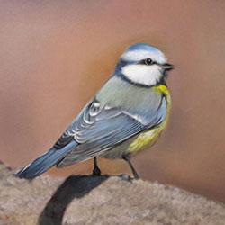 نقاشی رنگ روغن از پرنده