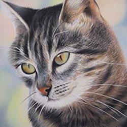نقاشی با مداد رنگی از گربه