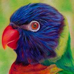 نقاشی مداد رنگی از پرنده