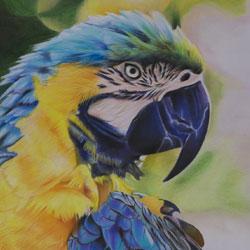 نقاشی با مداد رنگی از پرنده